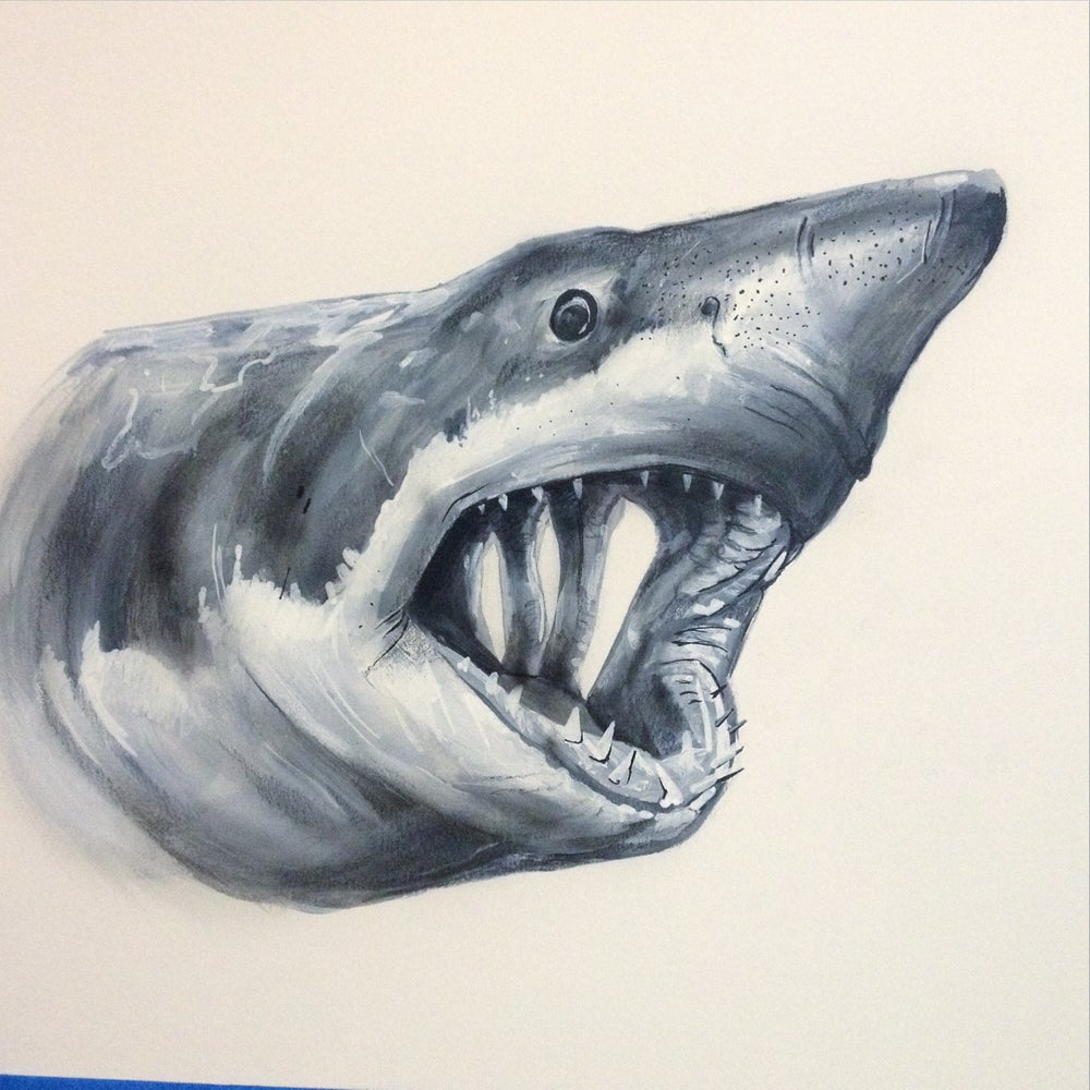 Image of Great White greyscale
