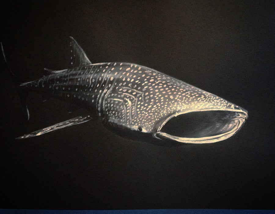 Image of whale shark greyscale