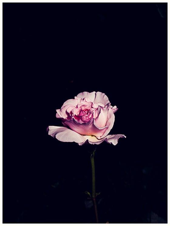 Image of Rose Garden No.1