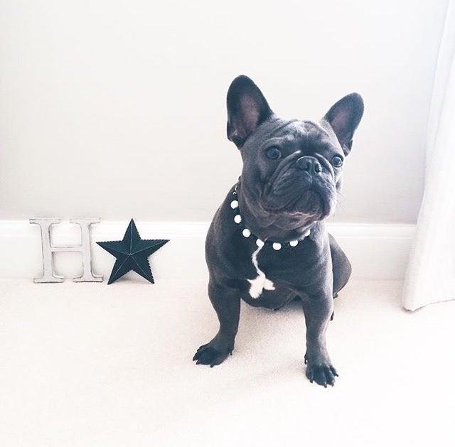Image of Dotty ~ Black & White Beaded Dog Necklace