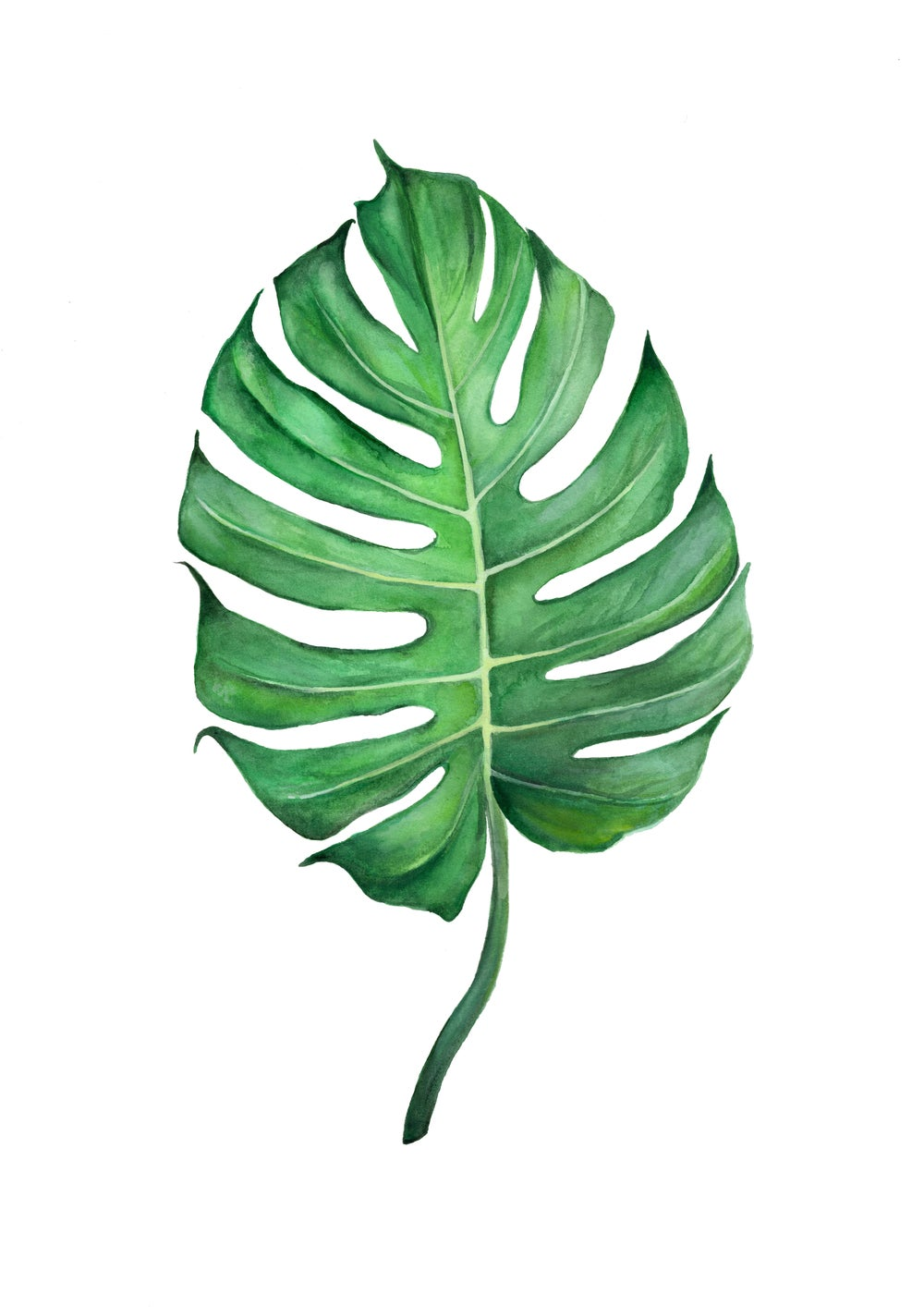 Image of Split Leaf