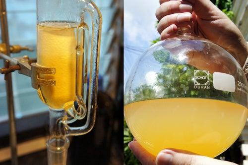 Image of LION'S MANE MUSHROOM spagyric tincture - alchemically enhanced plant extraction
