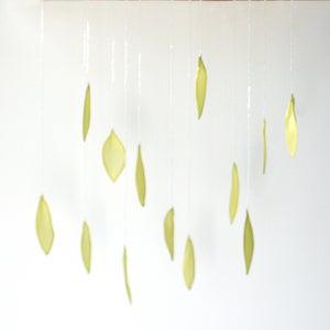 Image of V56  Leaves