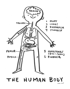 NEW! The Human Body