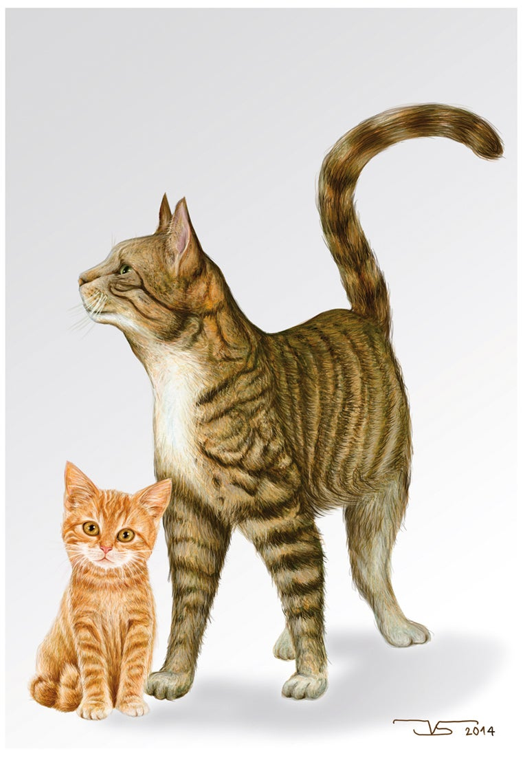 Image of DOS GATOS - TWO CATS  © Jose Vicente Santamaria 2014 Valencia-Spain