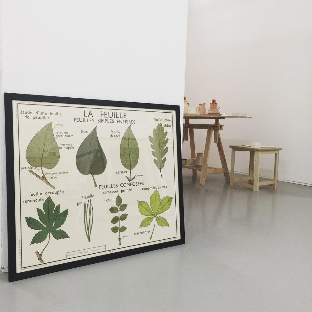 Image of 1950s Botanical Chart - Leaves