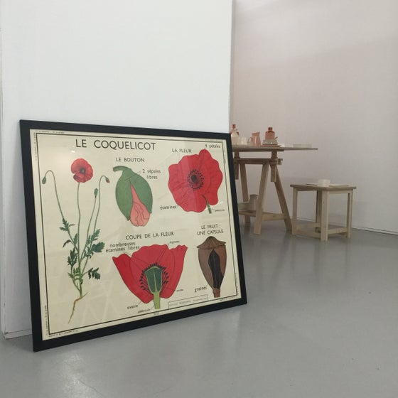Image of 1950S BOTANICAL CHART - Poppy