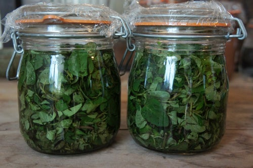 Image of OREGANO spagyric tincture - alchemically enhanced plant extraction