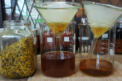 Image of CHRYSANTHEMUM spagyric tincture - alchemically enhanced plant extraction