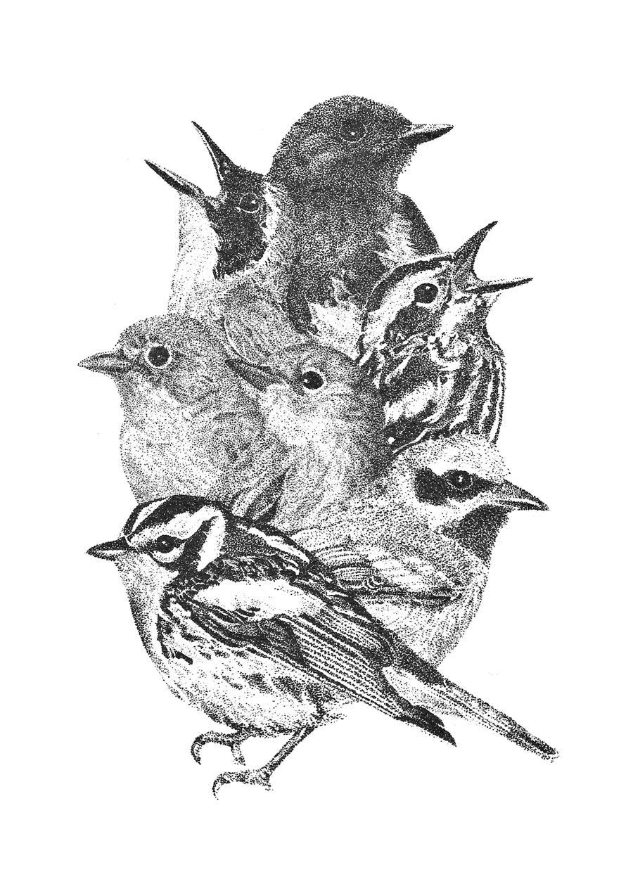 Image of Warblers Print