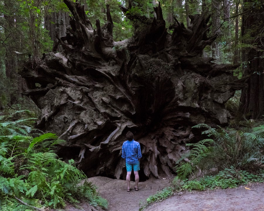 Image of Avenue of the Giants