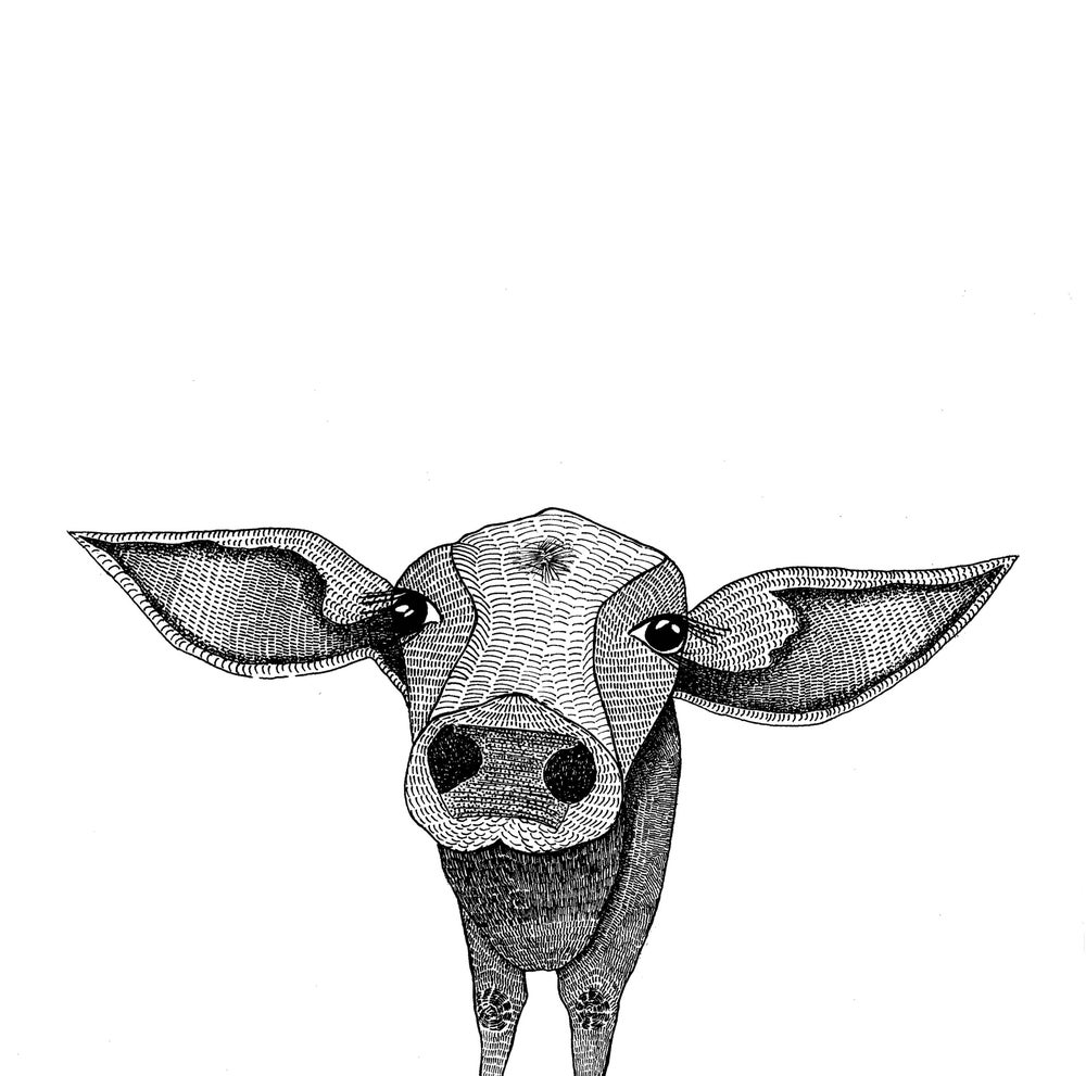 Image of Cow Landscape