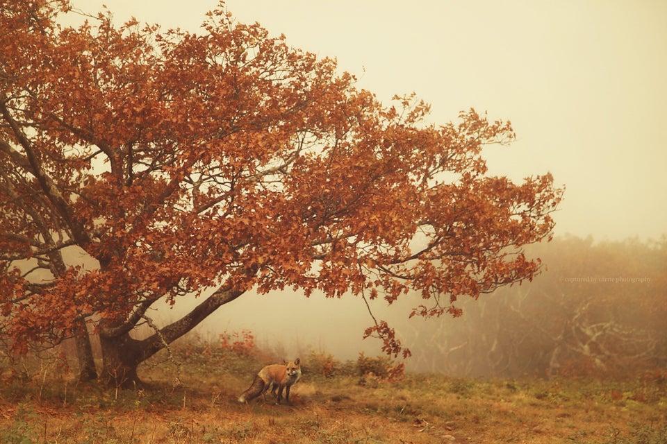Image of Harvest Season Mini Set