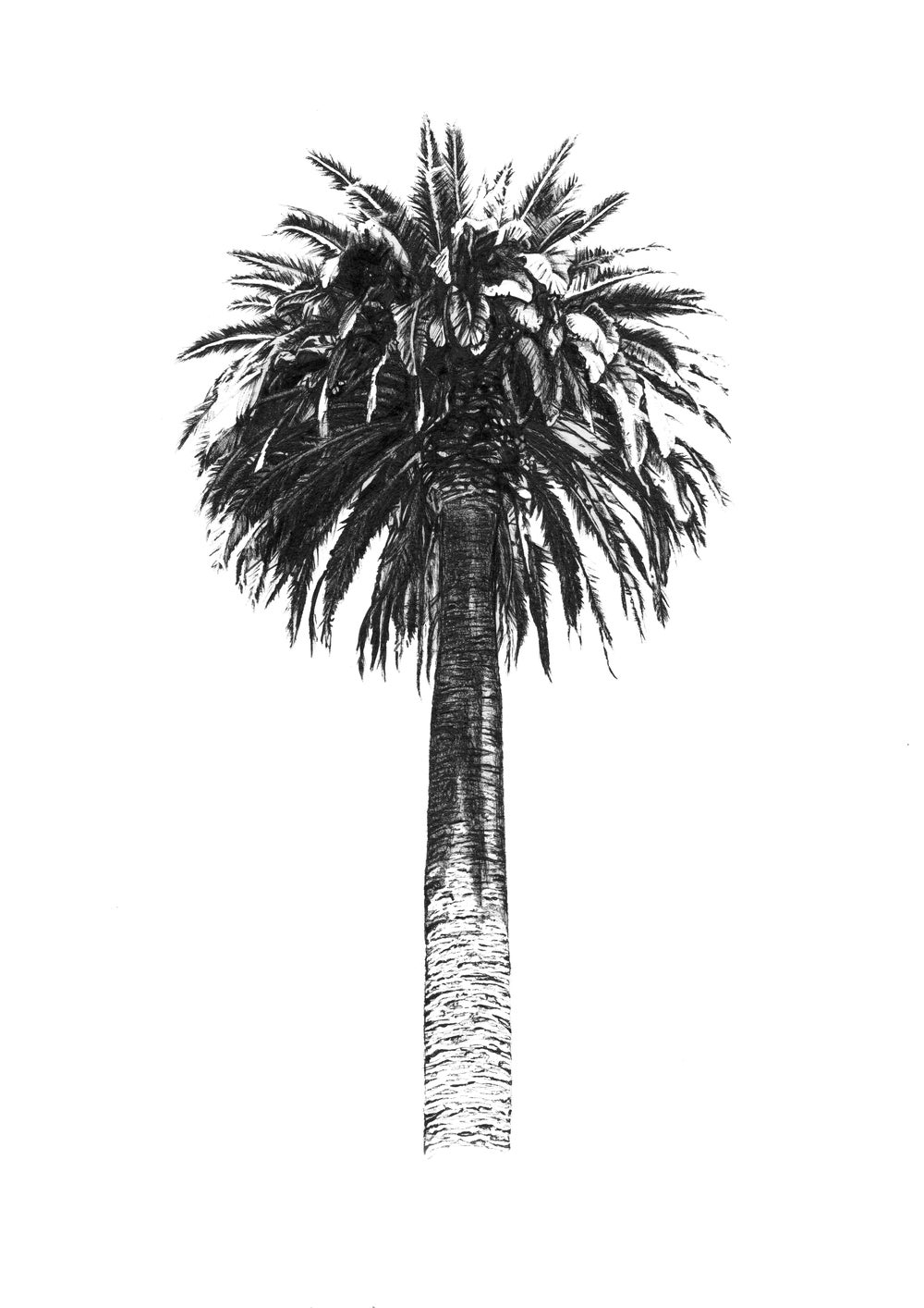 Image of Palm Tree