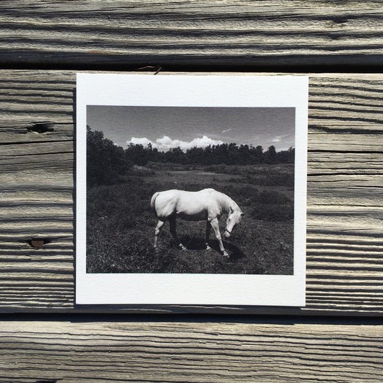 Image of Cloud and Horse