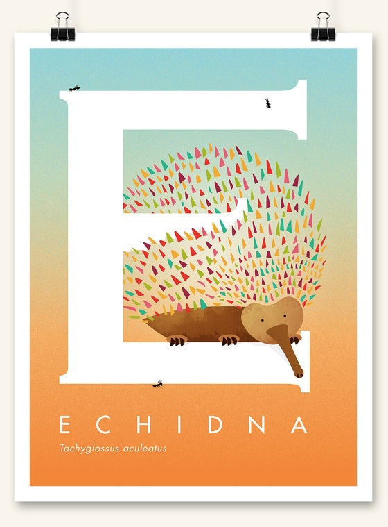 Image of Echidna