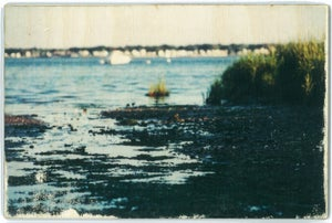 Image of Jess Repose's Slow Photography: Marsh