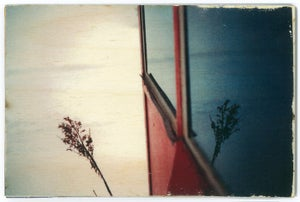 Image of Jess Repose's Slow Photography: Remnant