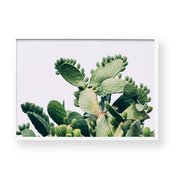 Image of Opuntia