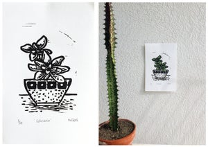 "Image of ""Succulent Collection"" 2015"