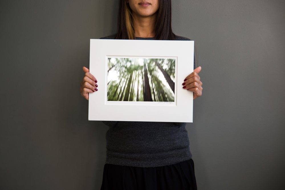 Image of Redwood Forrest #2