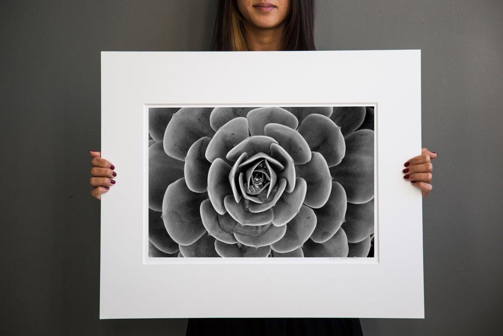 Image of Succulent