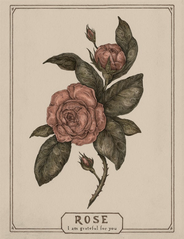 Image of Rose card