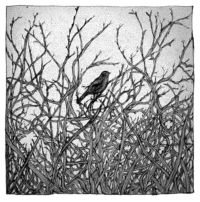 Image of 'Bird' by Maria Nilsson