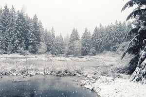 Image of Olympic Forest Snow photograph print