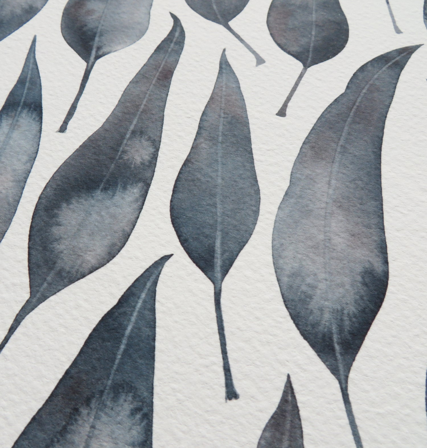 Image of Silver Princess Eucalyptus Leaves fine art print