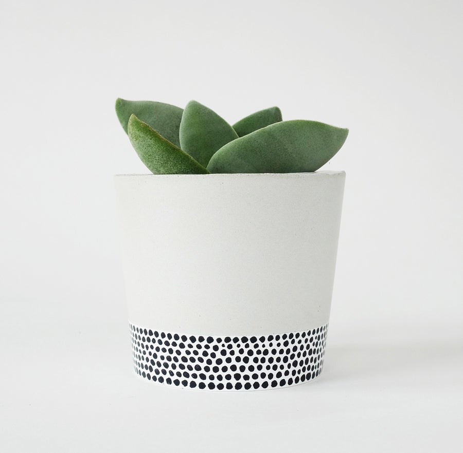 Image of Planter - Tiny Dots