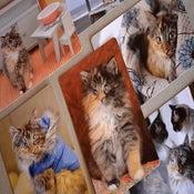 Image of Set of Six Wylla Stout Postcards