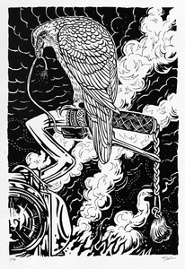 Image of Falcon