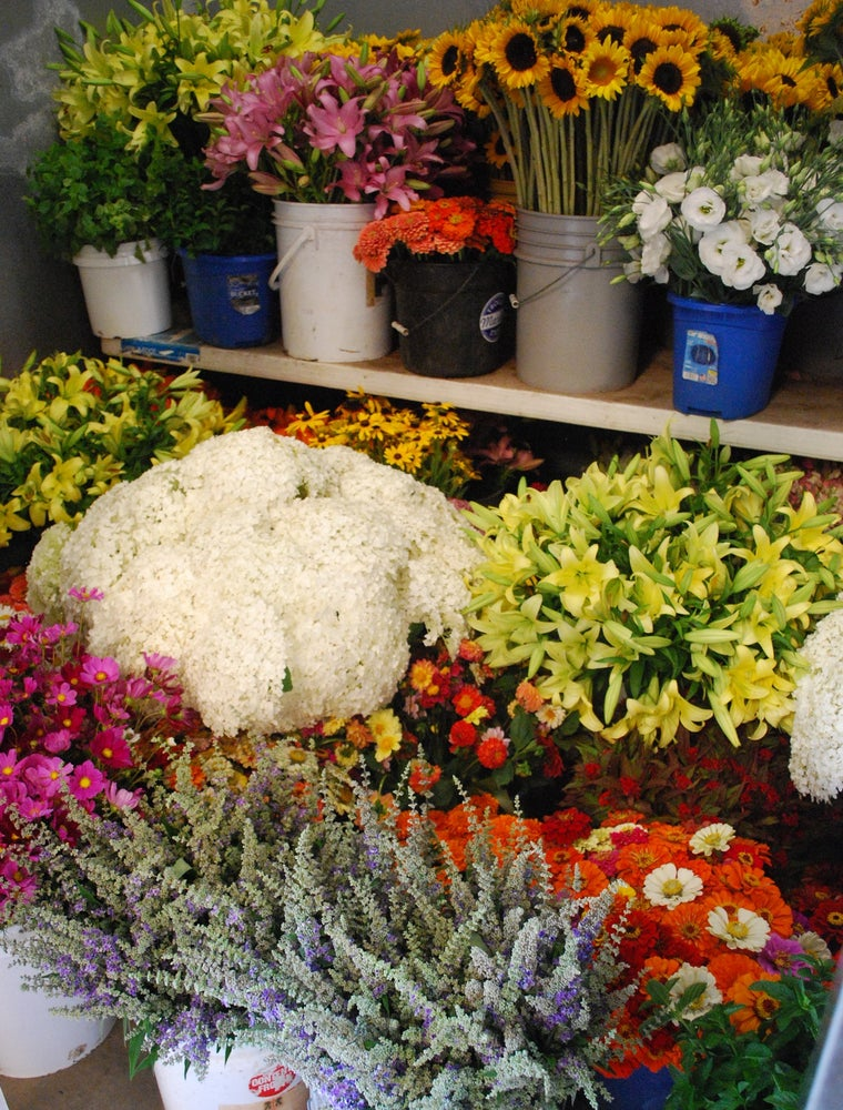 Image of Whitton Farms Full FLORAL CSA