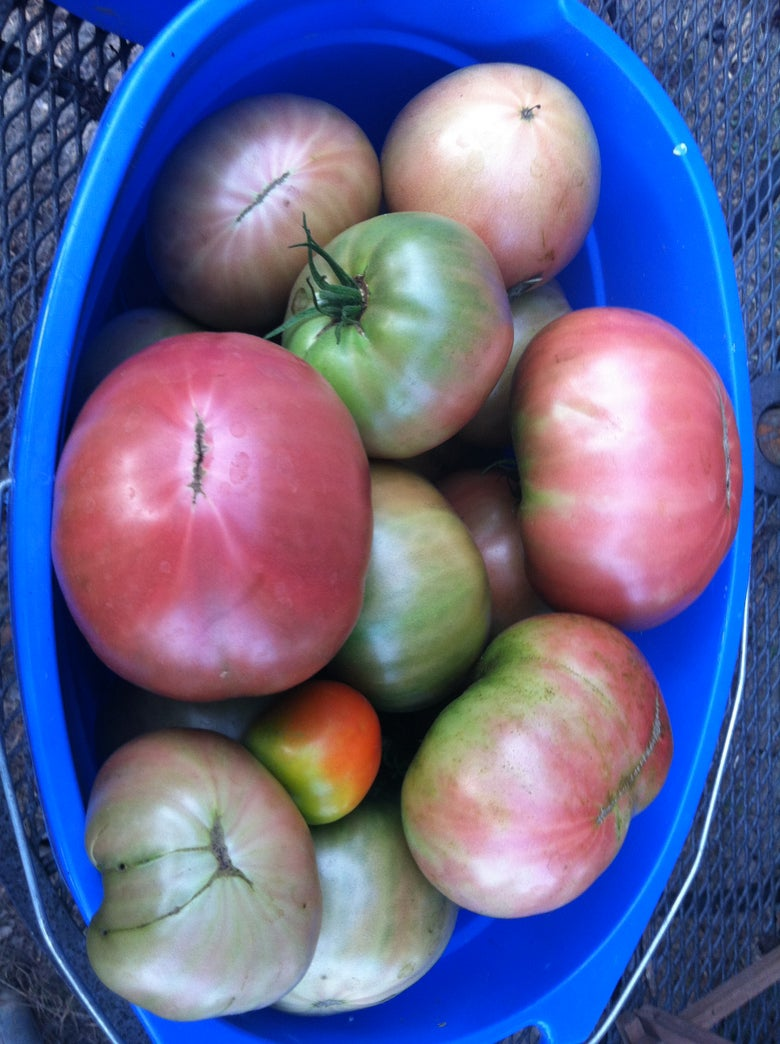 Image of Whitton Farm Veggie CSA - HALF SHARE