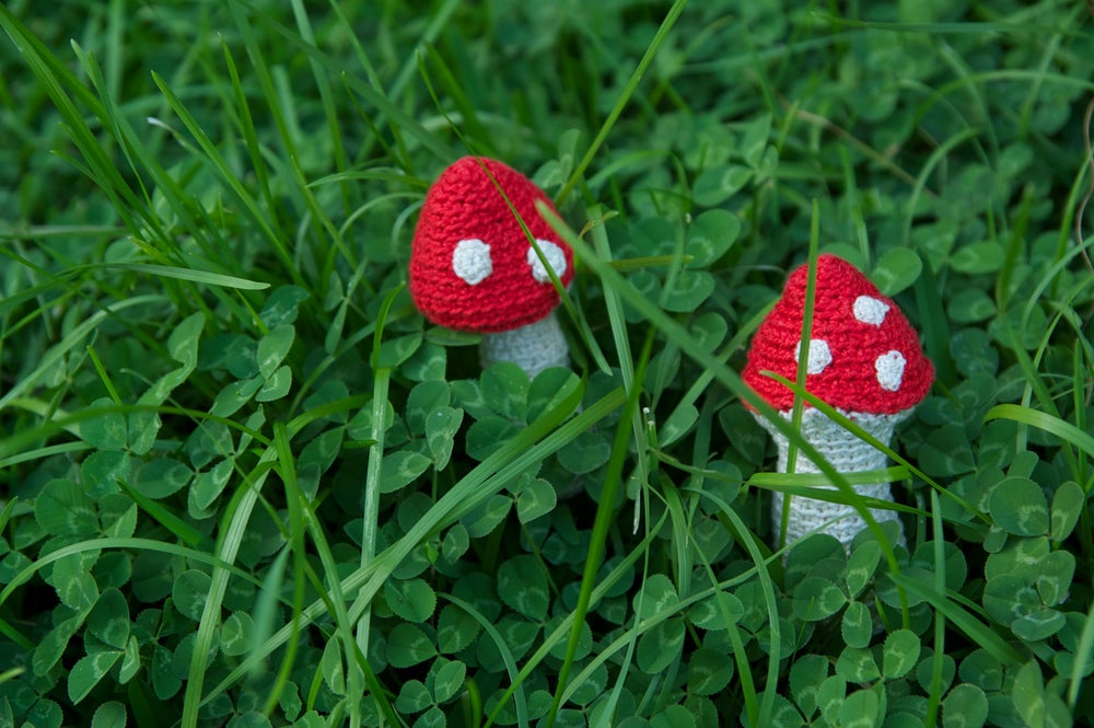 Image of Mushrooms - setas