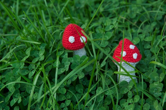 Image of Mushrooms - setas