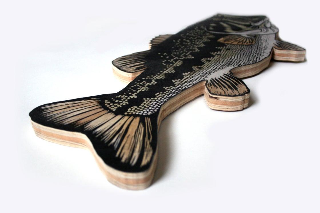 Image of Ayres' Largemouth Bass