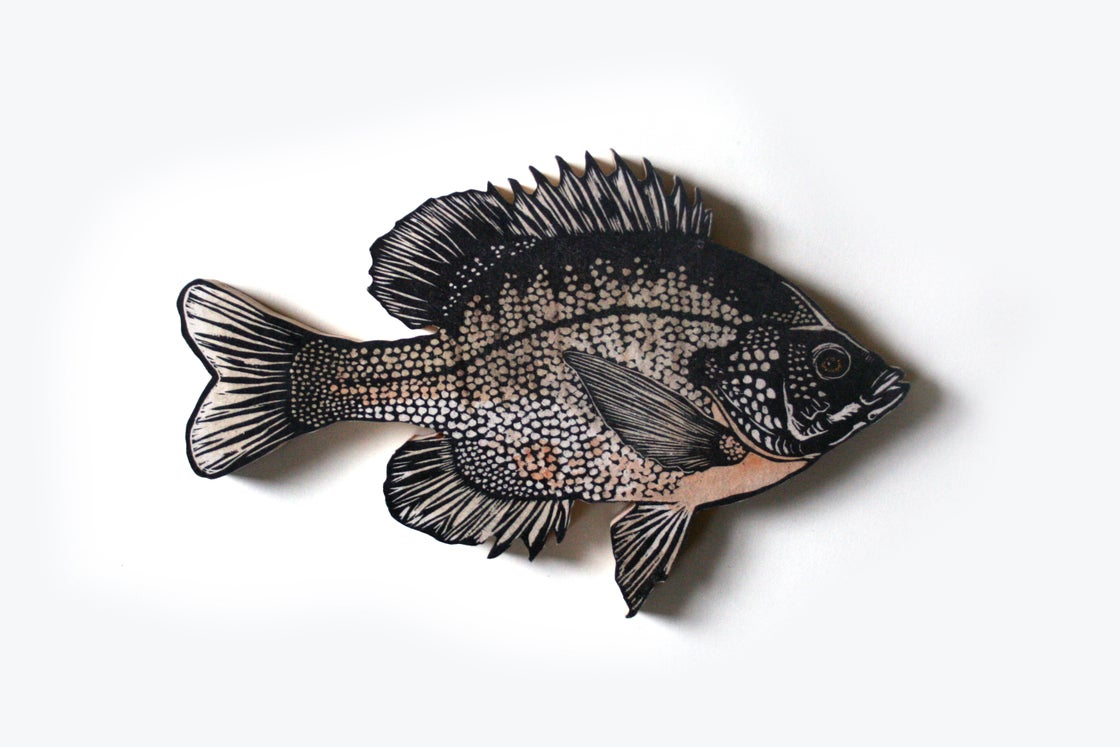 Image of Downen's Bluegill