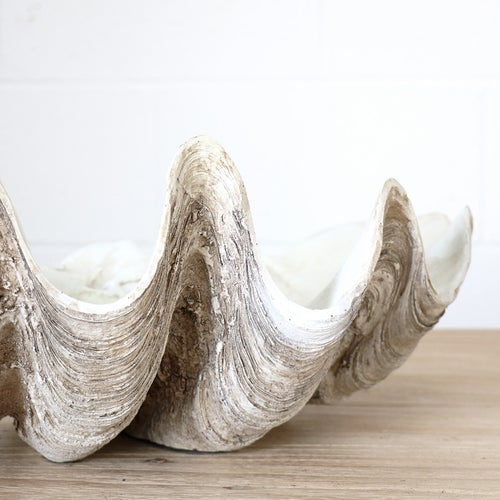 Image of Giant Clam