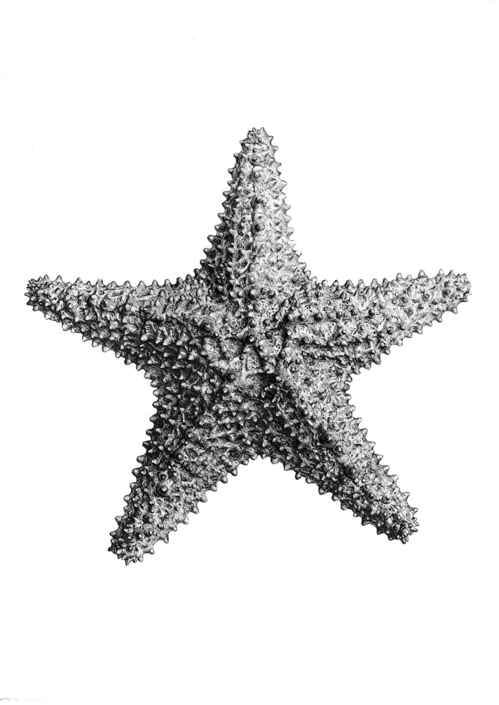 Image of Starfish