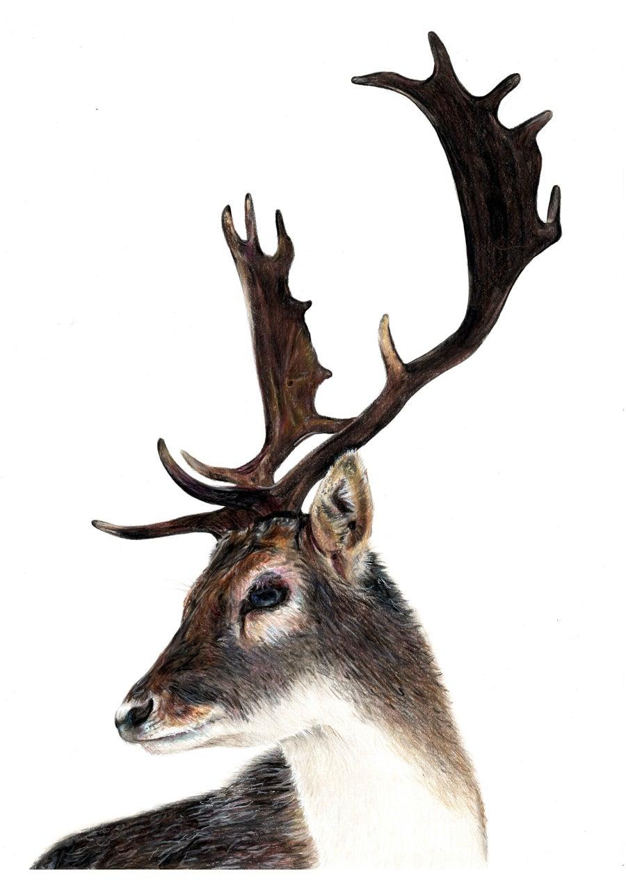 Image of Oh Deer