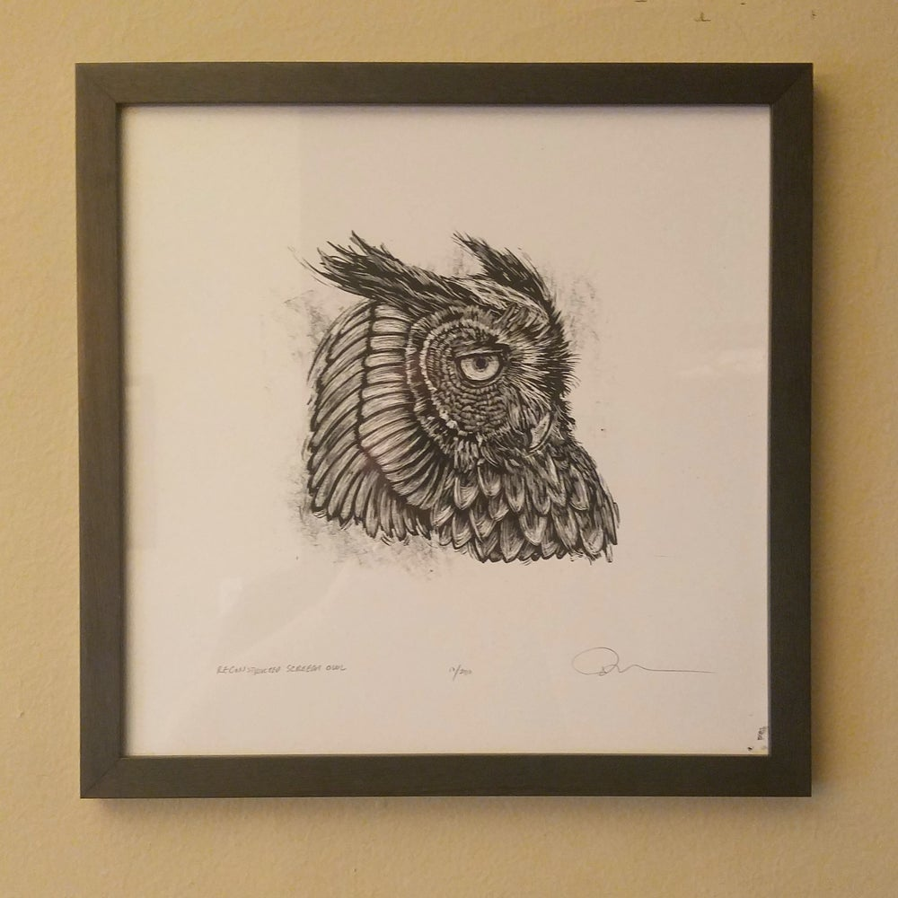 Image of Reconstructed Screech Owl