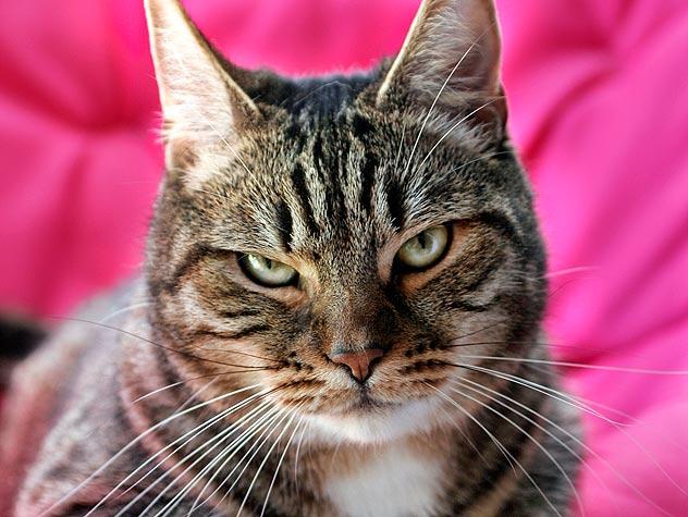 Image of Cat Spraying