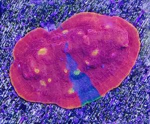 Image of Dynomite chalice 18 eyes