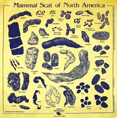 Image of Bandana- Mammal Scat of North America