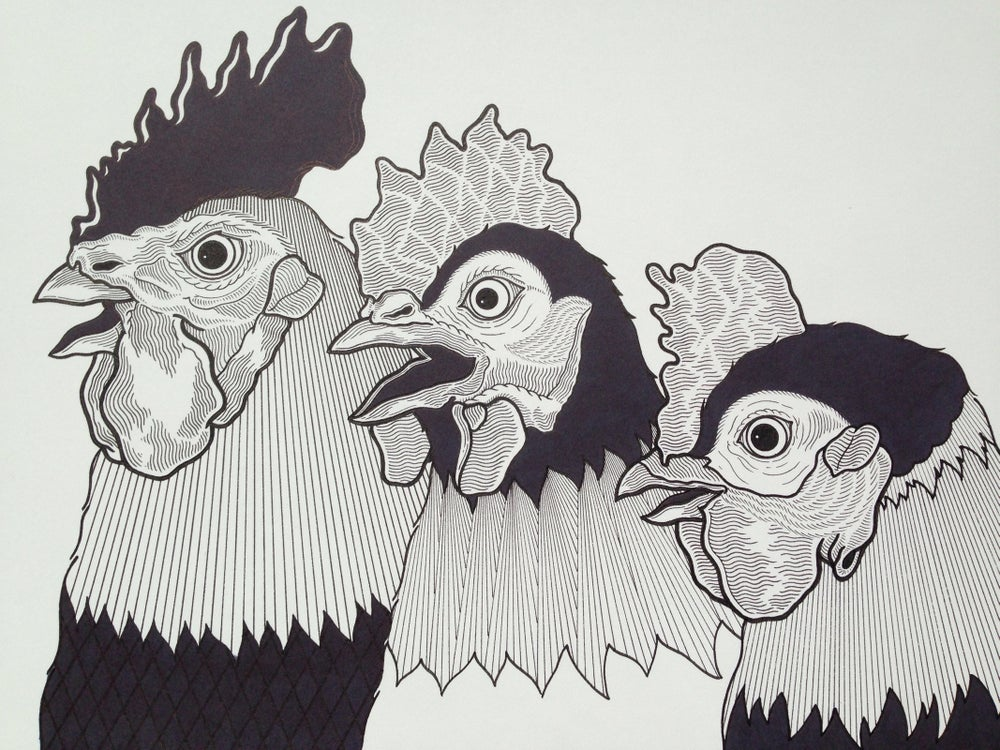 Image of Family of roosters.