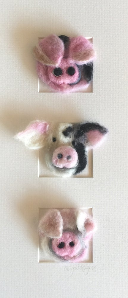 """Image of """"Three in a Box Pigs"""""""