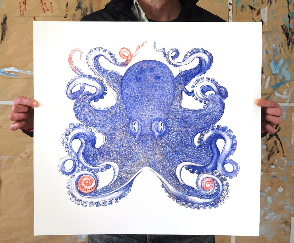 Image of Blue Octopus 22.5 x 24 inches. Limited Edition of 35 Prints