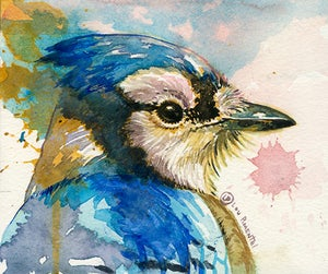 Image of The Bluejay